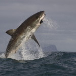 Sharks aka Insurance Companies