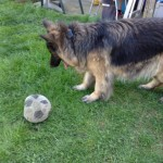 DeeOhhGee trying to play ball with a garden snake