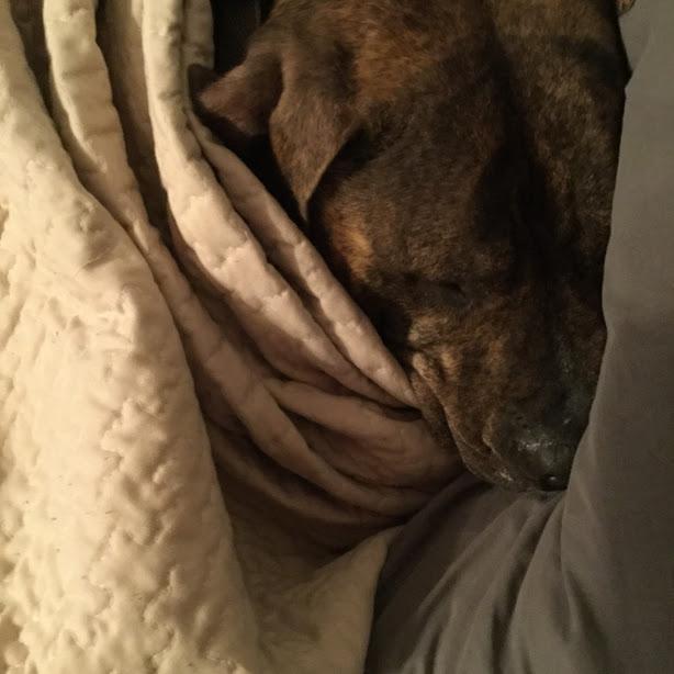 Spoonie Dog Leo RIP 2019